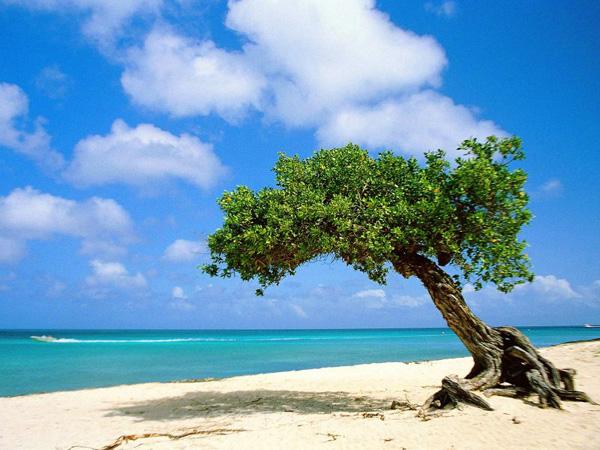 Arbol en la Playa
