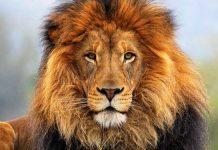 fábula león y ratón