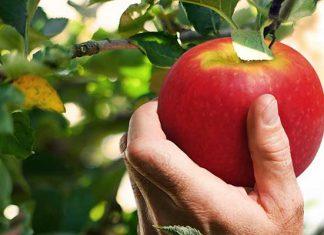 fruta-manzana