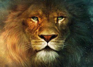 leon-miedo