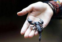 sabio-escorpion