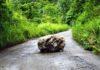 roca en el camino
