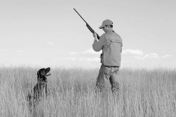 perro cazado historia