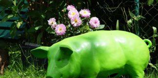 cerdito verde cuento