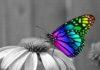 mariposa naturaleza sabia