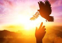 paz vida