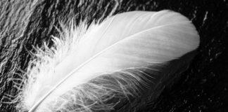 saco de plumas