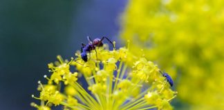 hormigas ramon lopez velarde