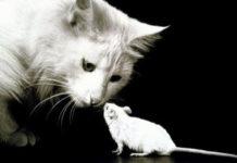 el mago y el ratón
