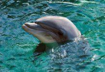 delfín estrategia reflexión