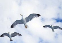 poema de Derek Walcott gaviotas
