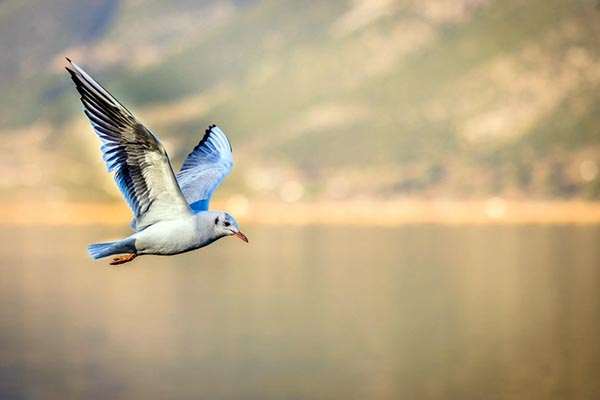 vuelo miguel hernandez