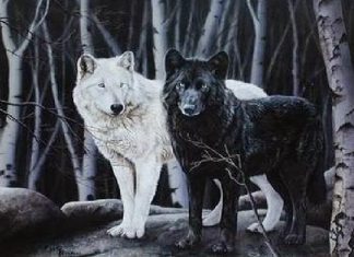 dos lobos leyenda