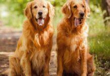 fábula de los dos perros