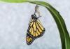 oruga y mariposa transformación
