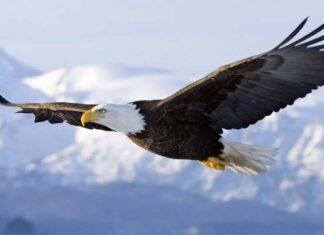 reflexión todos somos águilas